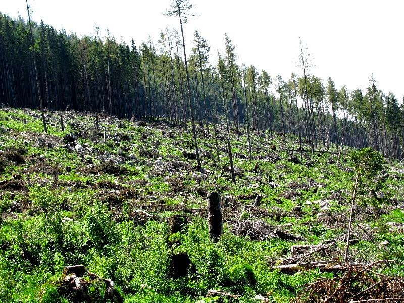 Высокие Татры: мёртвый лес